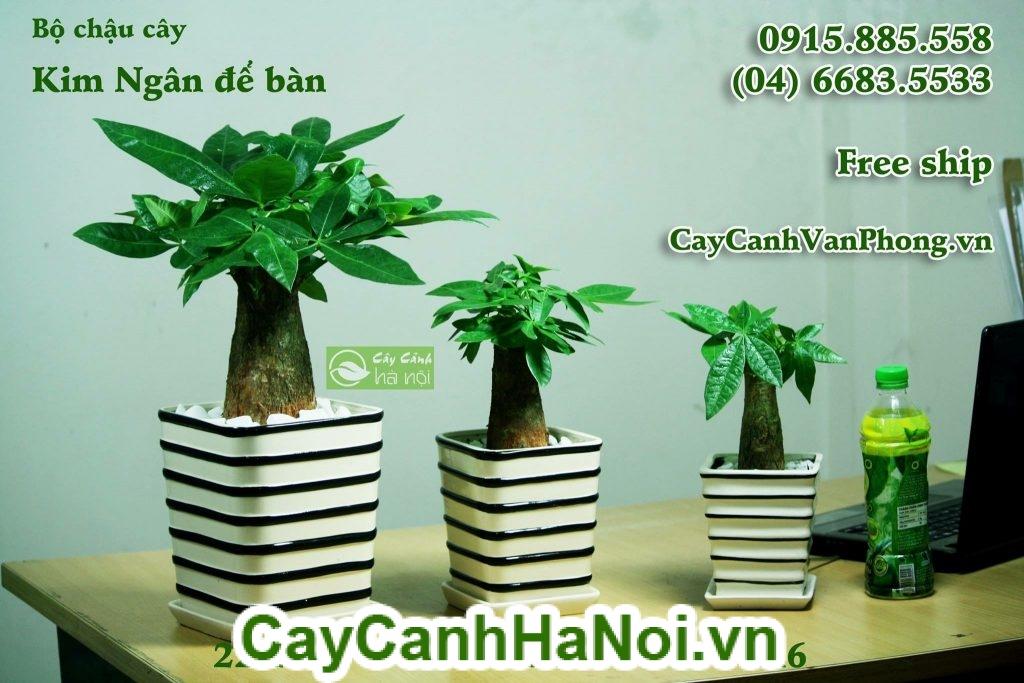 Cây Kim Ngân có vẻ ngoài đa dạng được trồng với nhiều hình dáng khác nhau