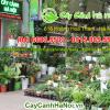 Dịch vụ cho thuê cây cảnh tại 616 Hoàng Hoa Thám