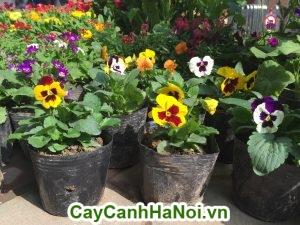 Nên trồng những loại hoa nhiều màu sắc