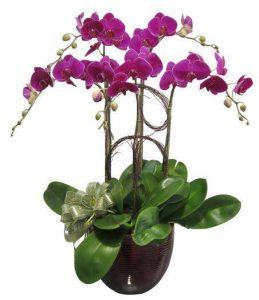 Cần có chế độ chăm sóc cây và Hoa để cây sinh trưởng, phát triển tốt